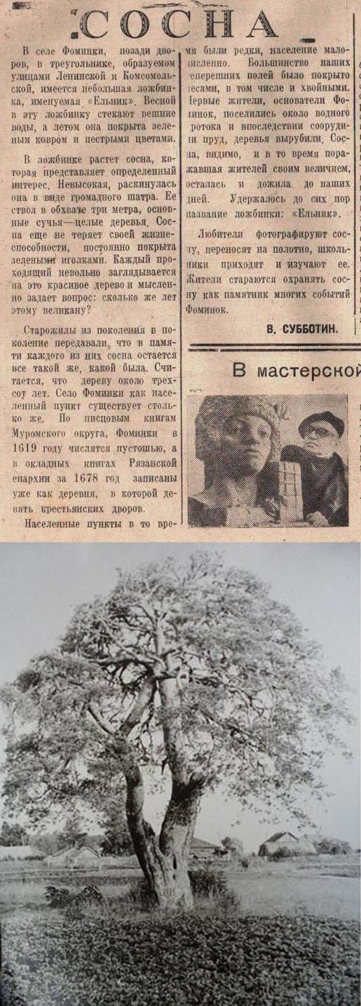 Газета Новая жизнь, 1971г. Сосна