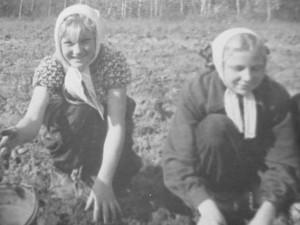 Уборка картофеля в совхозе. Начало 60-х.
